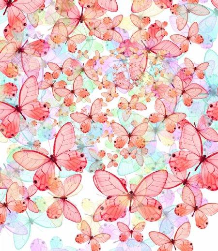 炫丽蝴蝶04高清图片