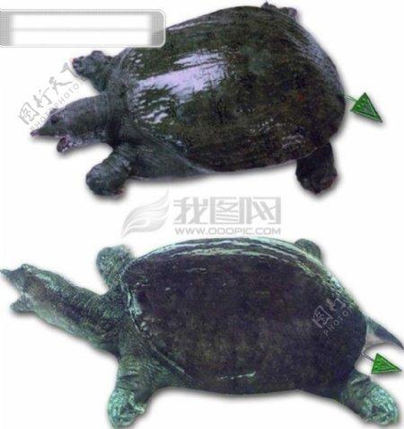 小乌龟博客背景图片