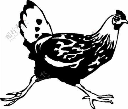 跑步小鸡剪贴画