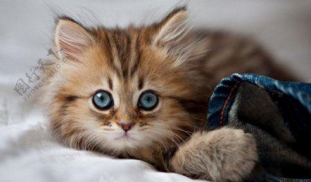 猫星人图片