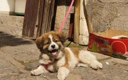 开心的狗图片