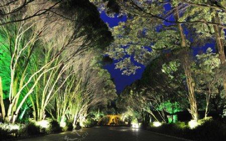 都江堰公园图片