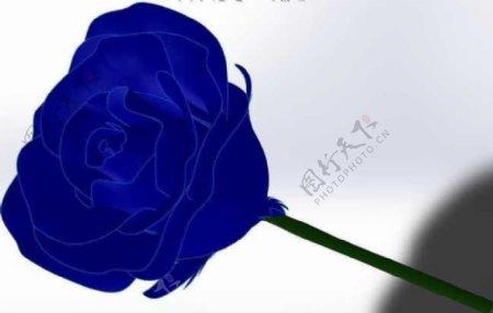 蓝玫瑰机械模型