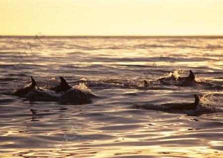 水中生物摄影