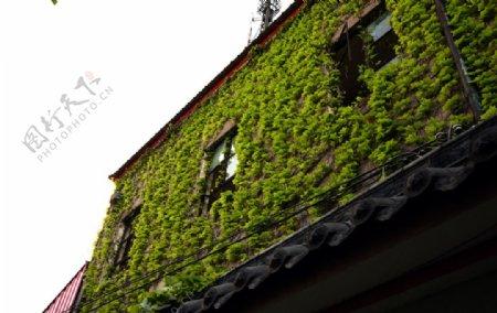 长满植物的墙