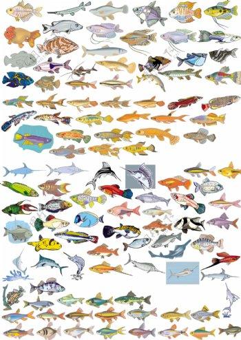 各种鱼矢量图