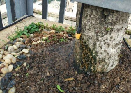 康催纽CU灌溉设备微喷效果