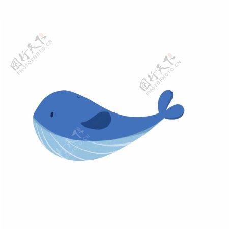 小清新手绘可爱海洋动物鲸鱼