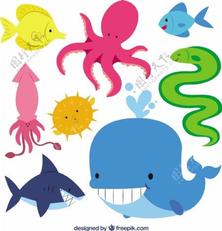 可爱的海洋动物