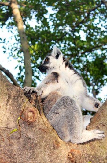 动物园毛茸茸可爱动物