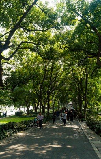 西湖边的长廊绿荫