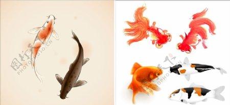 手绘鲤鱼金鱼