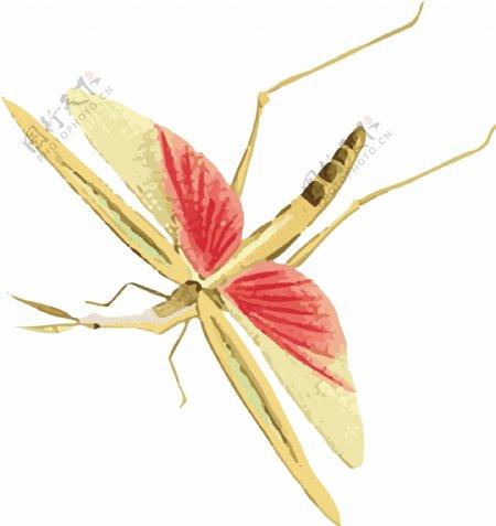 蚊子昆虫插画