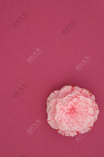 玫瑰红背景