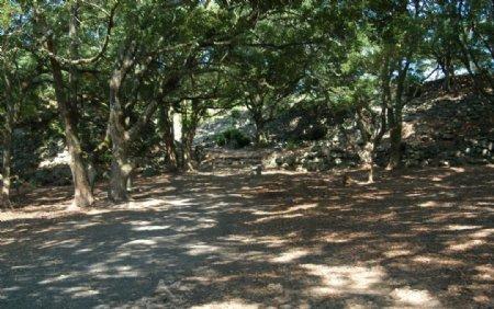山林绿荫摄影