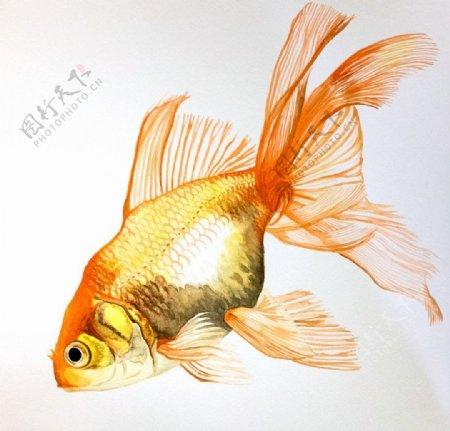 海洋鱼类水彩插画