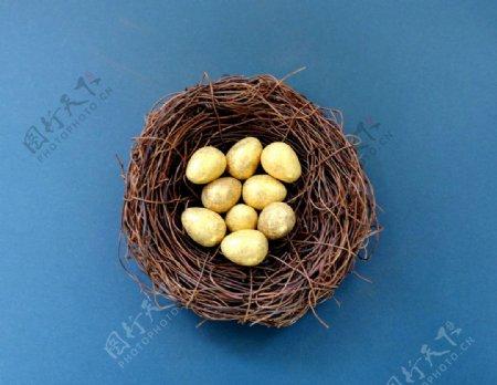 鸟巢中的金色鸟蛋
