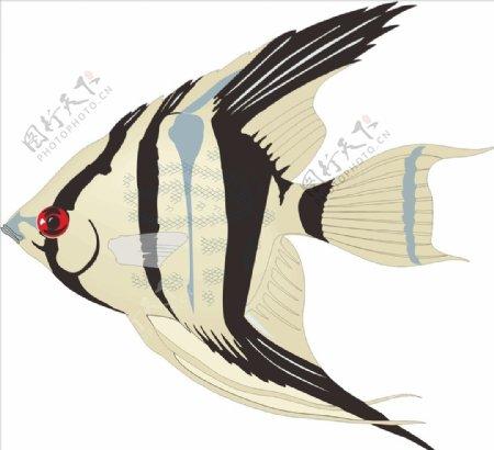 天使鱼手绘矢量海洋鱼
