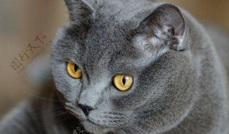 动物宠物狗猫生物世界