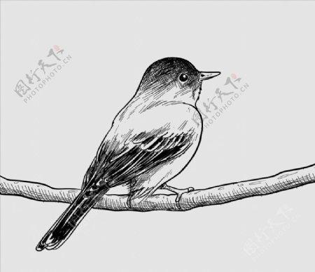 手工绘制鸟和花卡图片