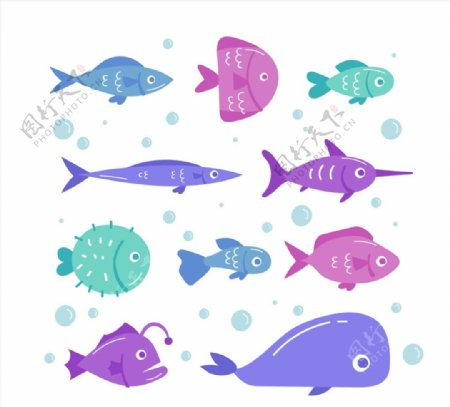 款彩色海洋鱼类图片