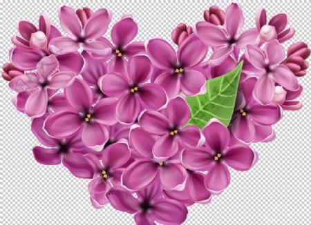 丁香花图片