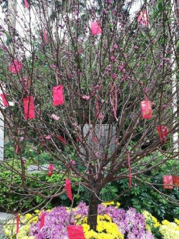 菊花桃树花艺展览图片