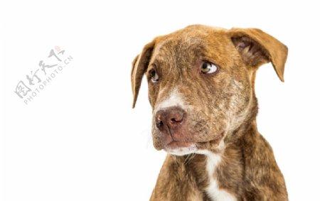 超高清可爱狗狗素材图宠物店图片