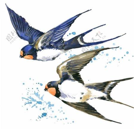 燕子水彩简约背景海报素材图片