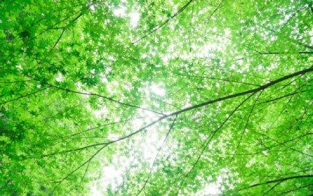 养眼的绿色屏保图片