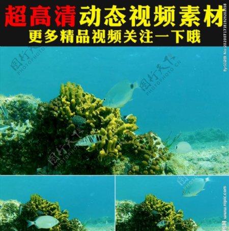 海底世界鱼群海藻实拍视频素材