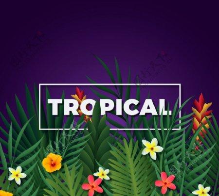 精致热带花草图片