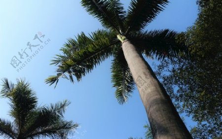 海边大树图片