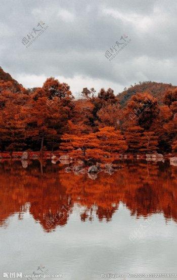 傍晚湖边的枫树林图片