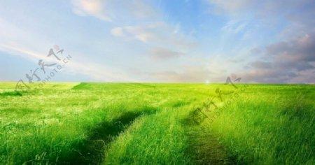 绿草蓝天图片