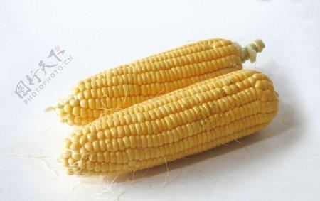 白底玉米摄影图图片