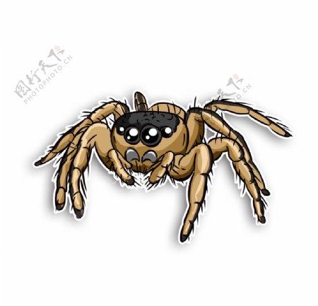 蜘蛛毒物昆虫五毒生物动物恐怖图片
