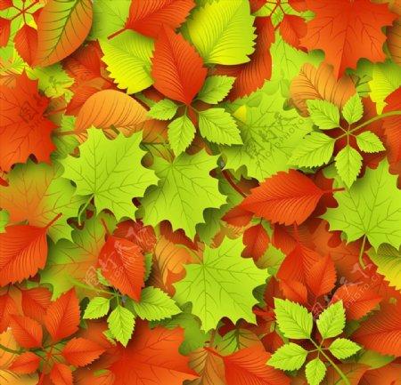 红色枫叶落叶背景图片