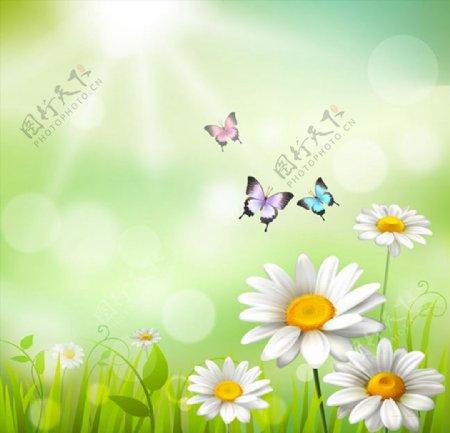 雏菊花丛和蝴蝶图片