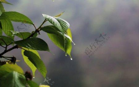 山间树叶春天图片