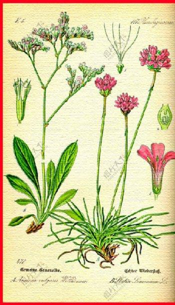 花草花朵植物图片