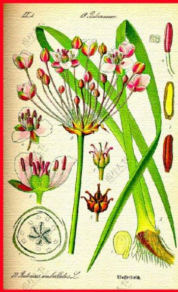 花草合集花朵手绘植物水彩图片