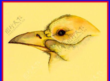 手绘鸟头图片
