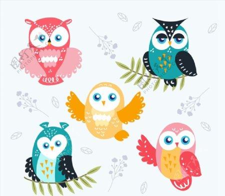 彩绘猫头鹰图片