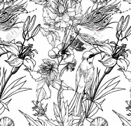 黑白手绘花鸟图片