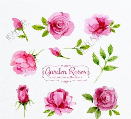 粉色花园玫瑰花图片