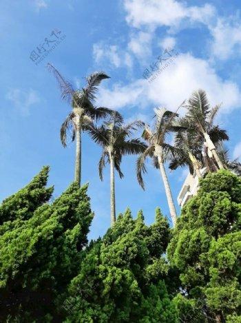 旅行树图片