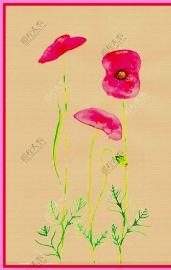 大红花图片