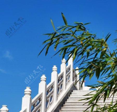 桥竹子图片