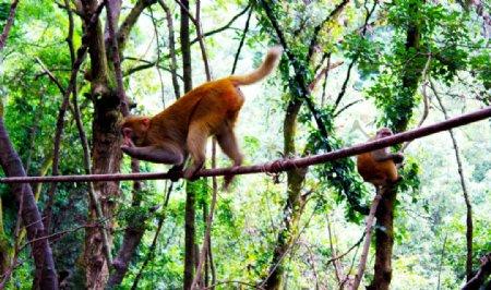 景区猴子图片
